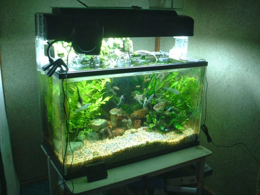 Top 10 DIY Aquarium Ideas For Your Next Aquarium Project