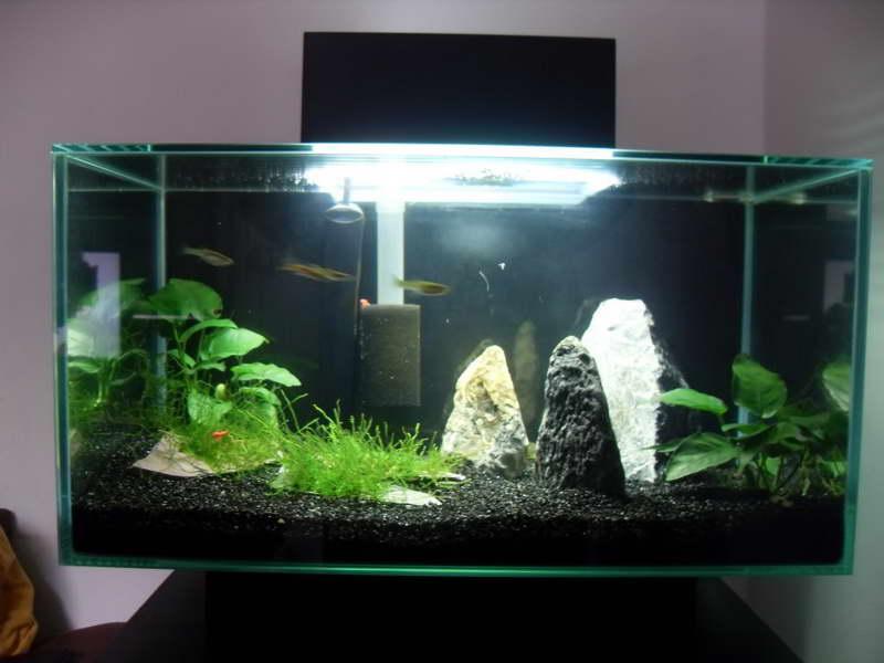 Top 10 DIY Aquarium Ideas For Your Next Aquarium Project